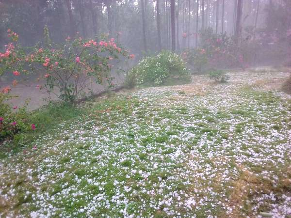 Hail stones rain came yesterday in Chikkamagalur