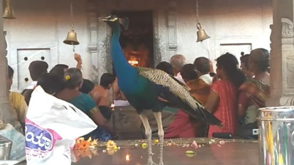 Surprise incident happened in Anantha Padmanabha Subranamya temple