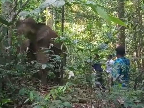 Forest department treated an injured elephant is Sullia