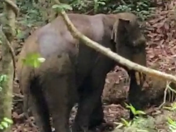 Injured elephant rescued in Sullia