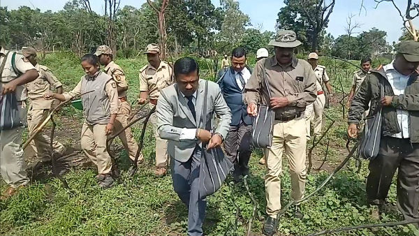 The process of greening in Bandipur has begun
