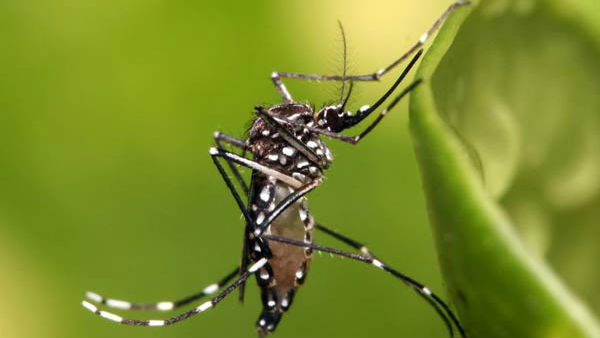 Mangaluru tops list of Malaria and Dengue in state
