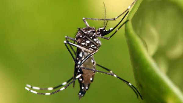 Dengue cases rising in Mangaluru