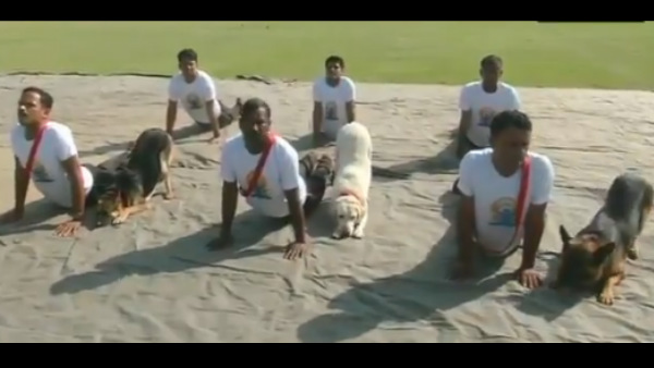 International Yoga Day: Viral Video of Dogs performing Yoga