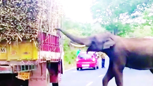 elephant stopped the cane truck in chamarajanagar