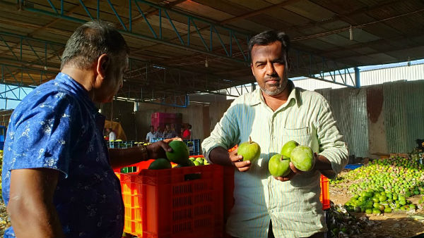 Mango growers and sellers happy in Srinivasapura taluk