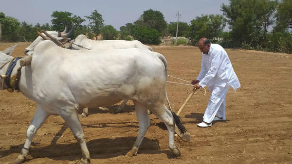 Ballari BJP MP Y Devendrappa helps farmers video viral
