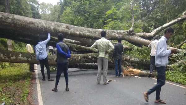tree and transformers fall down of heavy rain in chikkamagaluru
