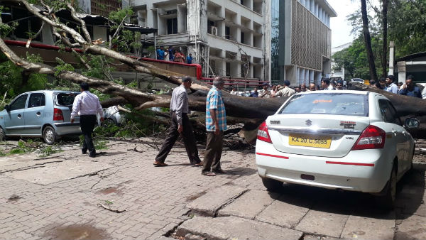 Huge tree fell on KMC hospital compound in Manipal udupi