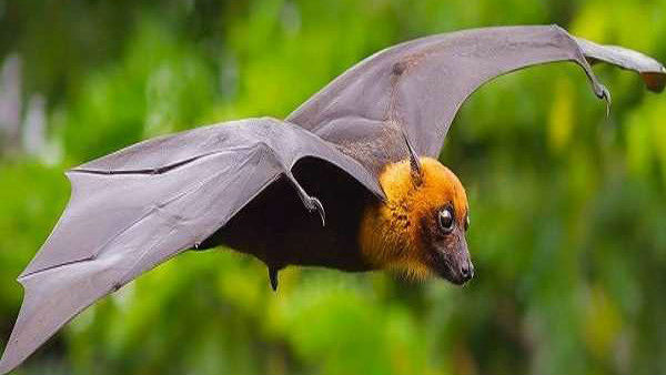 Nipah virus high alert in Tamil Nadu and Rajsthan