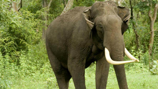 farmer seriously injured by elephant attack in ramanagara