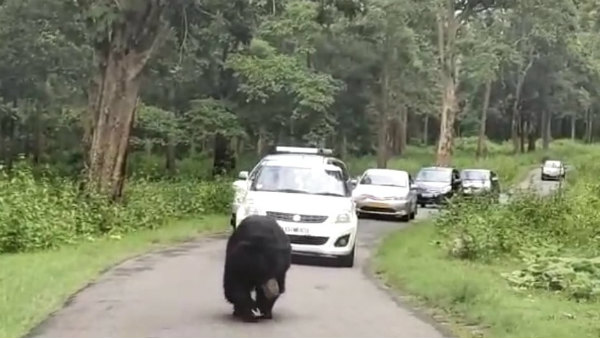 Bandipur forest road witnessed Bear citing