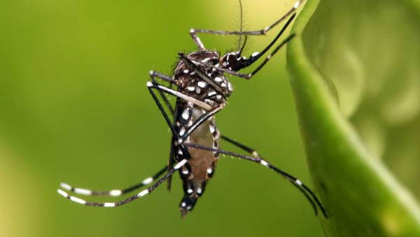dengue cases rised to 352 in dakshina kannada district