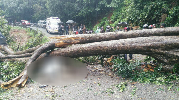 Forest officer dies after tree falls in Siddapura
