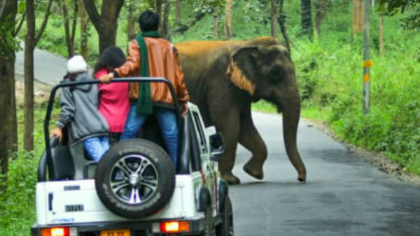 Forest Department to advance Safari Road extension in Bandipur