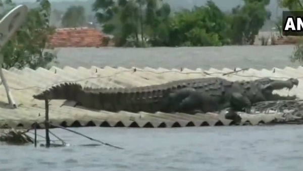 A crocodile sitting top of a house in Belgaum