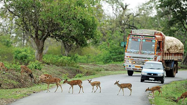 Will Ban On Bandipur Night Travel Become permanent