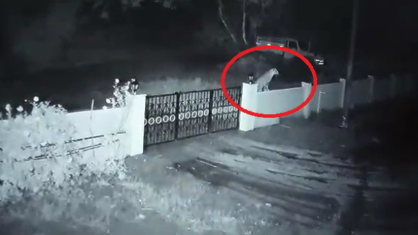 Footage Of Leopard Carrying A Dog From House In Tirthahalli Captured On CC TV