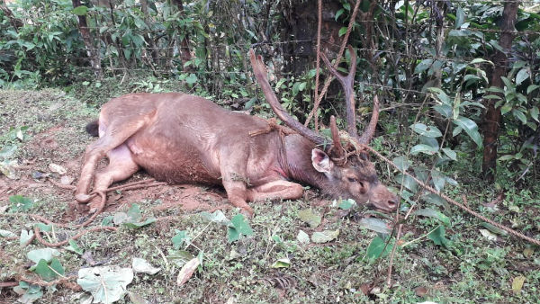Villagers Rescued Elk In Kogre