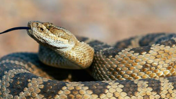 Woman Dies After Sitting On Snake Wihile Speaking On Phone