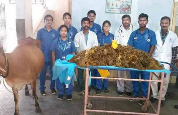 Tamil Nadu Doctors Remove 52 KG Plastic From Cows Stomach