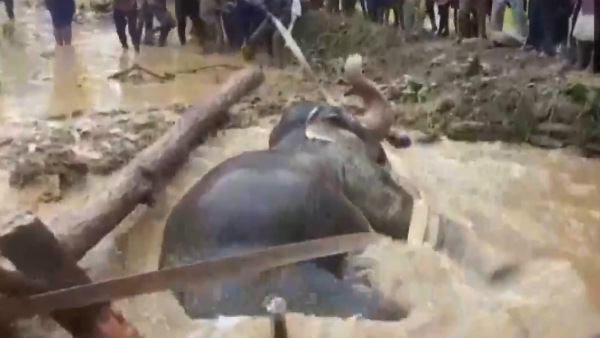 Elephant In Odisha Fell Into A Muddy Well Rescued