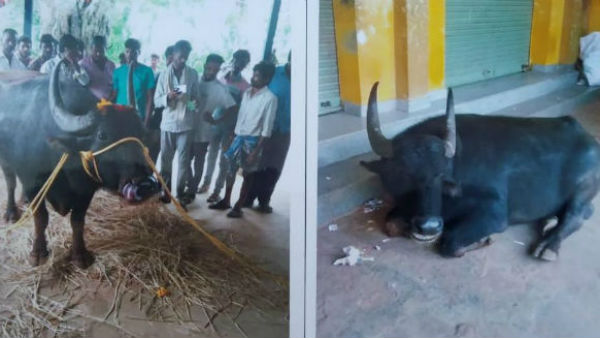 DNA Test For Buffalo In Davanagere