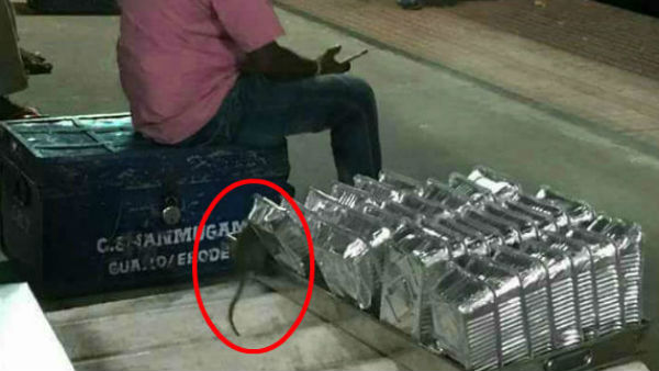 Rat menance haunts Chennai Railway Division, Rs 22k to Trap One Rodent