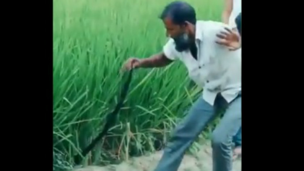 Man Pulls Snake from Grass... What Happens At the End?