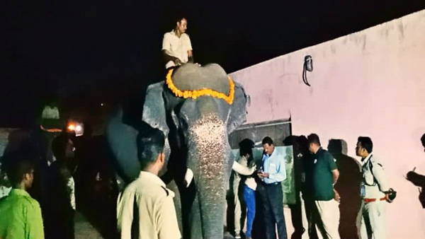 Substantial Increase In Weight Of Dasara Elephants
