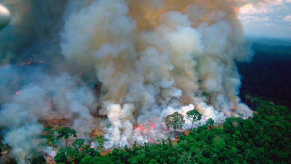 #amazonforestfire