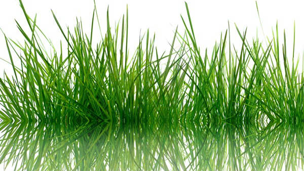 Small Grass And Life In Nature