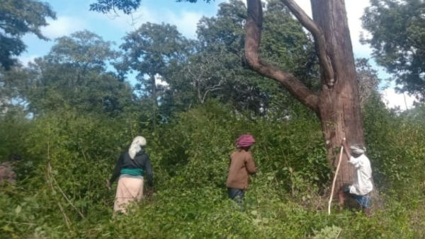 Forest Officers Taking Precautions To Avoid Wildfire In Bandipur