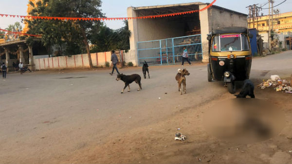Street Dogs Attack And Ate Calf In Hiriyur