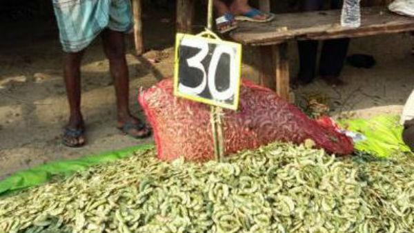 ಮೈಸೂರು, ಚಾಮರಾಜನಗರ ರೈತರಿಗೆ ಈ ಬಾರಿ ನಷ್ಟ ಕೊಟ್ಟ ಅವರೆಕಾಯಿ