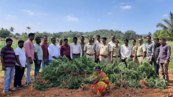 Couple In Hanur Grown Ganja To Sell It In Chikkalluru Jatre