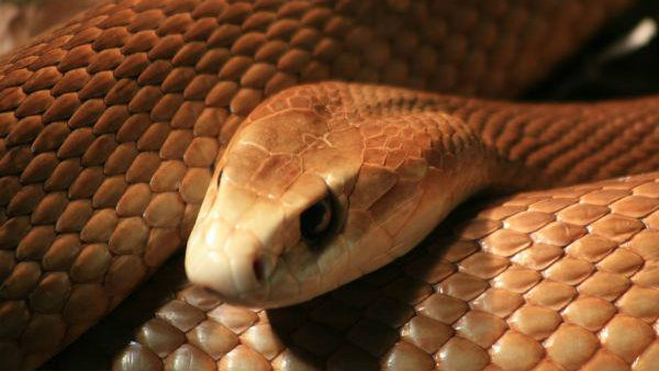 Husband Appoints Snake Catcher To Kill Wife