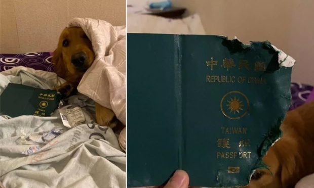 Taiwan Women Escaped From Coronavirus By Her Dog