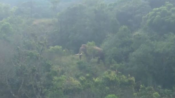 Video Of Elephant In Chikkamagaluru Went Viral
