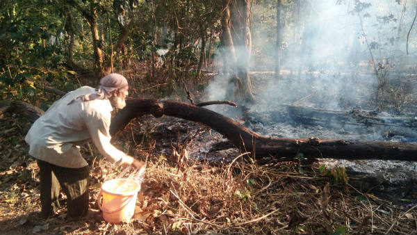 Fire On Coffee plantation In Mudigere
