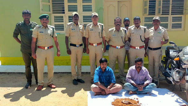 Two Headed Snake Trafficking: Two Arrest In Shantanur