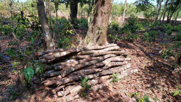 Forest Officials Seized Million Worth Timber In Hebri