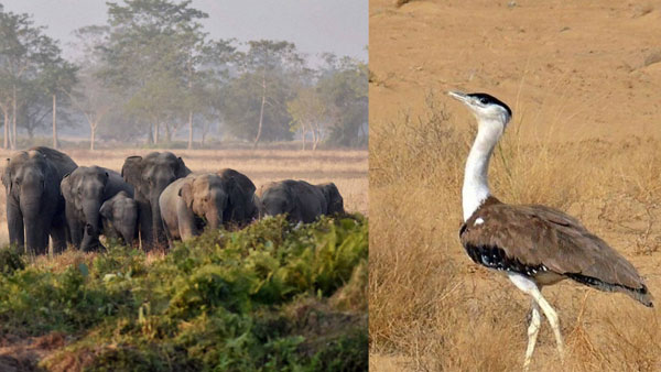Asian Elephants, Bengal Floricans from India among 10 to be on UN endangered list