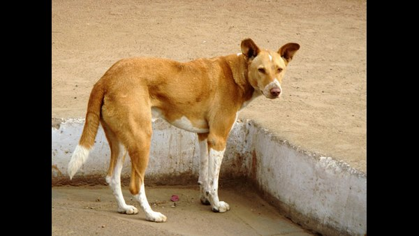 Coronavirus Lock Down effect: Request To Humans By Stray Dogs