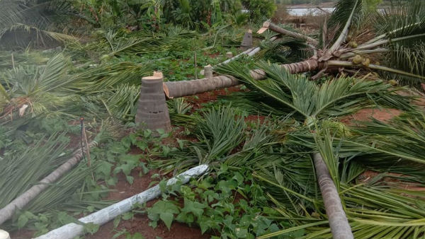 Tumakuru Tree Cut Case Village Accountant Suspended