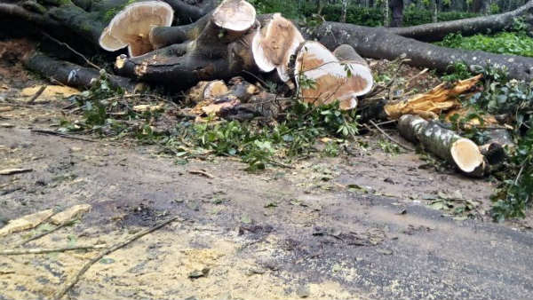 3368 Trees To Cut For Shivamogga-Tumkur 4 Lane Road