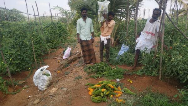 ಕೊರೊನಾ ಎಫೆಕ್ಟ್: ತರಕಾರಿ ಬೆಳೆದು ಕಂಗಾಲಾದ ಚಿತ್ರದುರ್ಗ ರೈತ