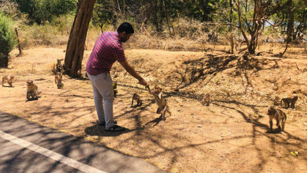 Bjp Youth Union Feed Starving Animals In Districts Tourist Places