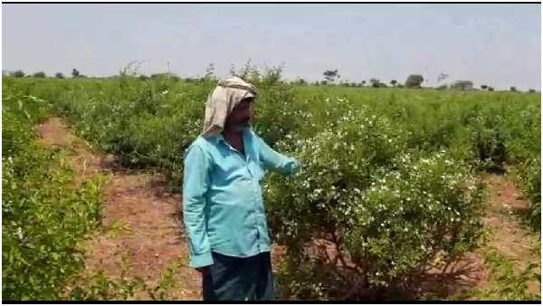 A Bellary Farmer Sad That He Cant Sell His Flowers And Fruits