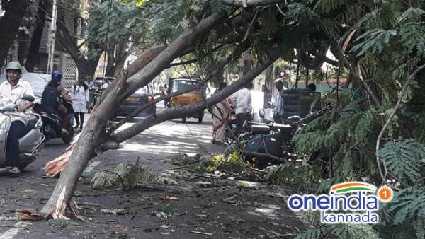1100 Trees Were Uprooted Due To Heavy Rain In Bengaluru
